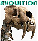 DVD Evolution VS. Intelligent Design